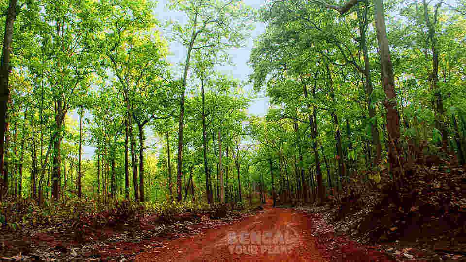 How to reach saranda forest