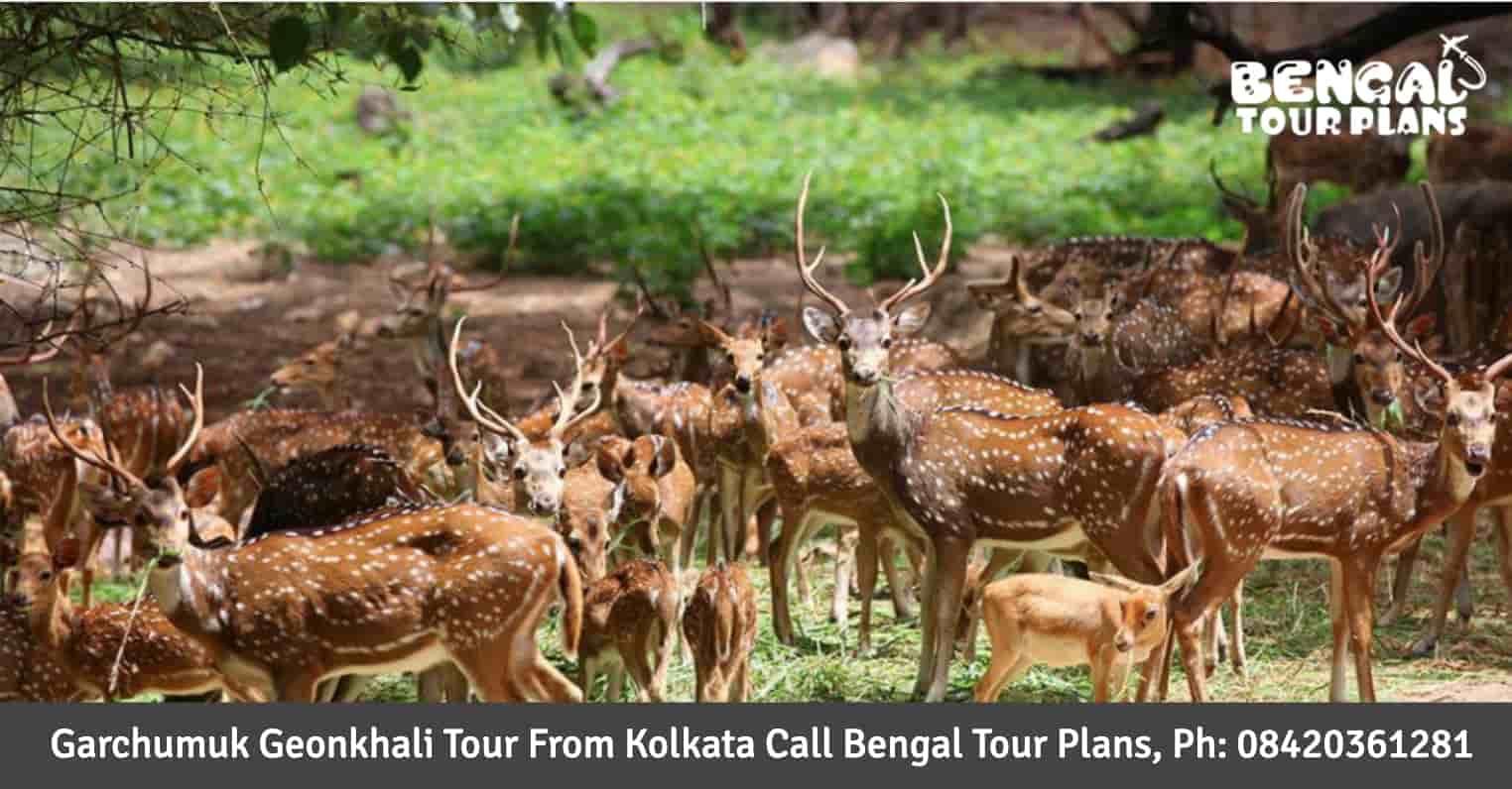 Garchumuk Geonkhali Tour Package From Kolkata