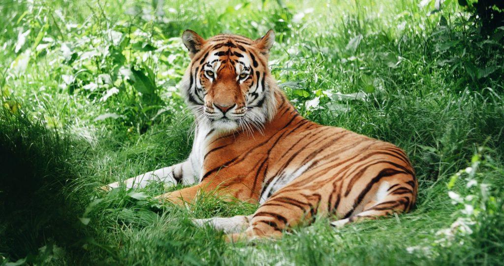 Sundarban Tour By Bengal Tour Plans