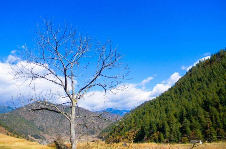Sangti Valley At Arnachal Pradesh Tour