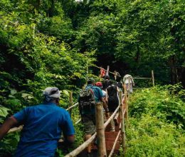 Satkosia Forest Tour